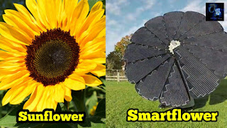 Smartflower, Working Of Smartflower, Cost, Electricity Produced, Buy, Smartflower Business