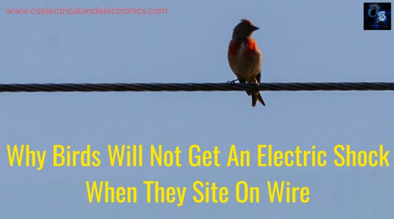 Why birds will not get an electric shock